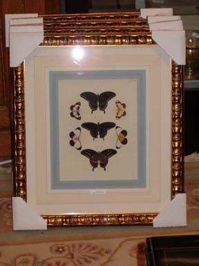 SET OF EIGHT COPPER ENGRAVINGS OF BUTTERFLIES BY