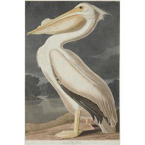 [Prints] Audubon, John James, American White Pelican