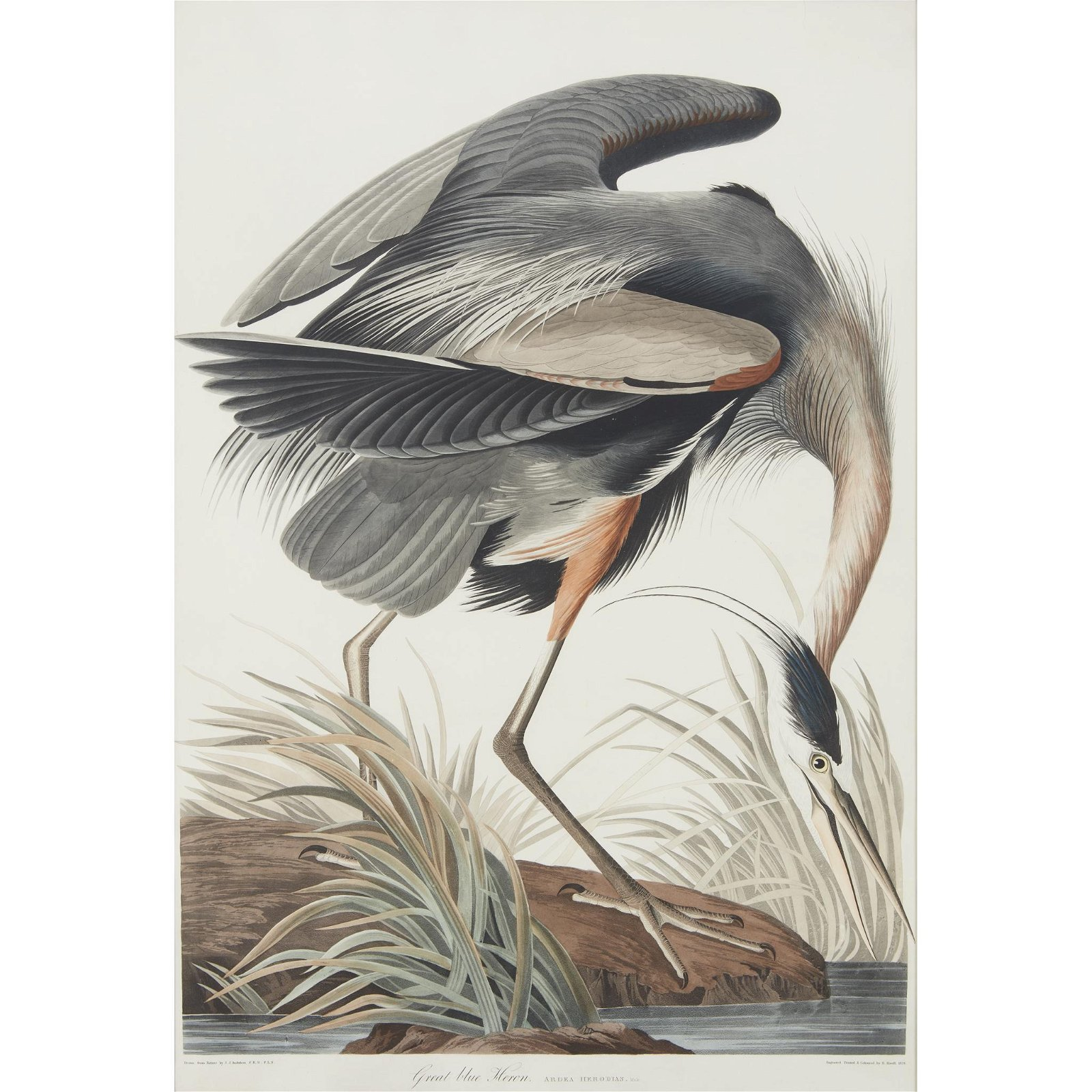 [Prints] Audubon, John James, Great Blue Heron