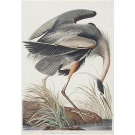 [Prints] Audubon, John James, Great Blue Heron