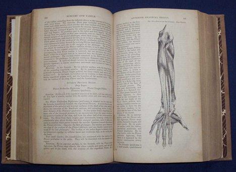 2006: 1 vol. Gray, Henry. Anatomy, Descriptive and Surg