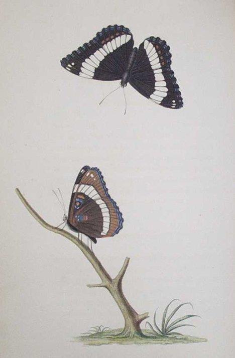 2014: 1 vol. Say, Thomas. American Entomology. Philadel