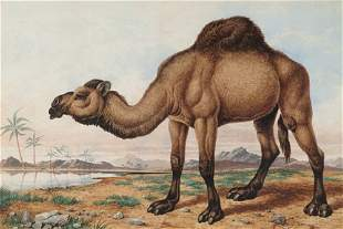 "CHARLES EDWARD BRITTAN, ""Camel"" Watercol"