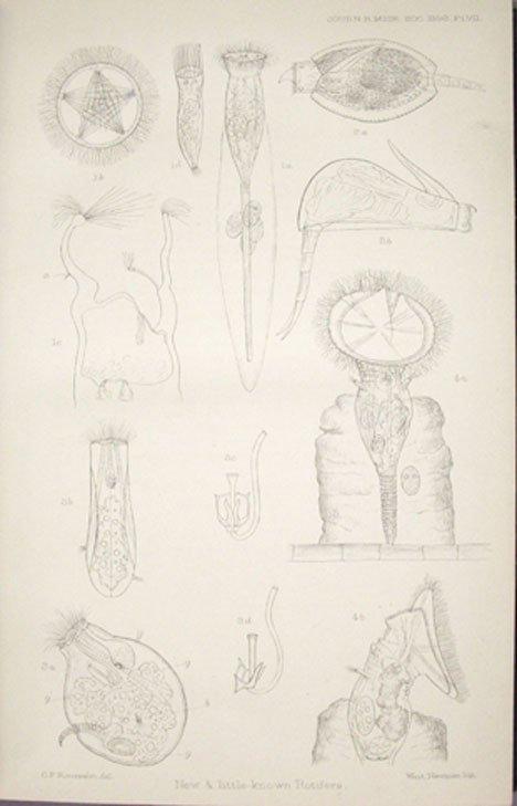 3440: 40 vols. Royal Microscopy Society. Journal of...