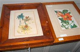 532 FOUR FRAMED BOTANICAL PRINTS Late 19th  early 20t