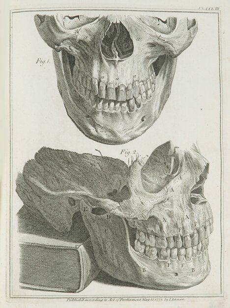 1179: 1 vol. Hunter, John. Natural History of Human Tee