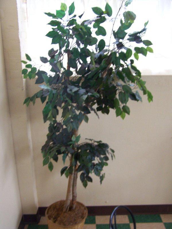 1010: Artificial Ficus Tree