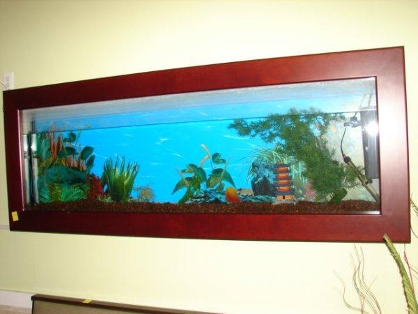 "504: Wall mounted fish tanks, 7'x31""x7"""