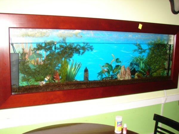 "504D: Wall mounted fish tanks, 7'x31""x7"""