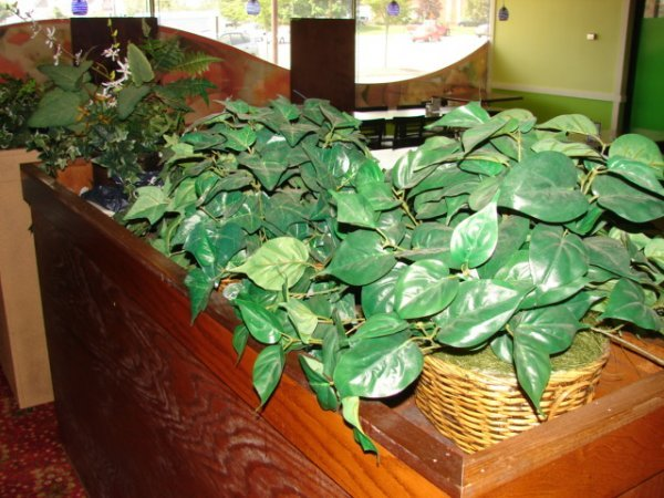 515: Lot of artificial ivy plants