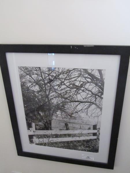 Artist Unknown, Untitled (Horse Farm). Silver Geletin