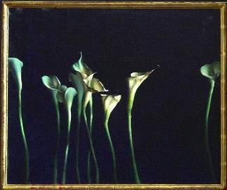 81: Calla Lillies #3 By Sprick