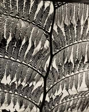 BRETT WESTON, 1955 Giant Fern Botanical Abstract