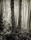 "WYNN BULLOCK, ""Forest"" 1960's Photogravure"