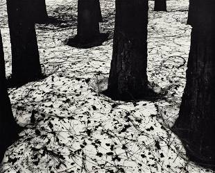 BRETT WESTON, 1950 Snow Pine Tree Forest Nature