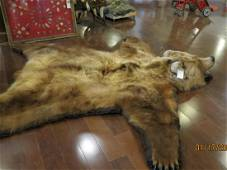 GRIZZLY BEAR RUG -EXCELLENT CONDITION