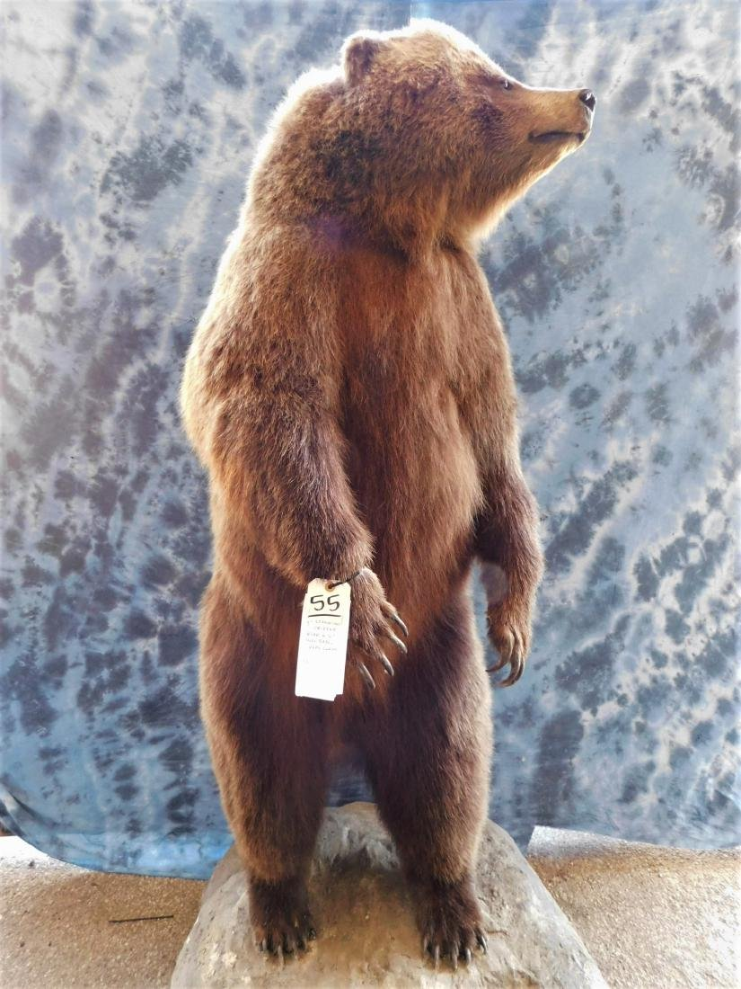 GRIZZLY BEAR STANDING ON REAR LEGS -6.5' -REAL CLAWS