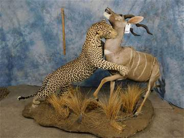 FB LEOPARD ATTACKING LESSER KUDU (TXRESONLY) (ONE$)