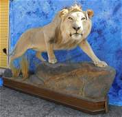 FB LION (TX RESIDENTS ONLY)