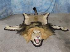 NEWER LION RUG W/INCREDIBLE MANE (TX RESIDENTS ONLY)