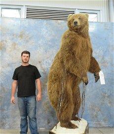 XL BROWN BEAR -EXCELLENT COND -ALL ORIGINAL CLAWS