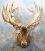 RED STAG SH MT TAXIDERMY