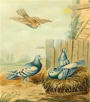 ENGLISH SCHOOL (EARLY 19TH CENTURY), PIGEONS NESTING,