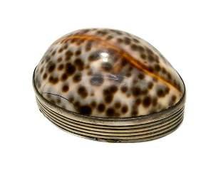 William Potter Silver Cowry Shell Snuff Box, George