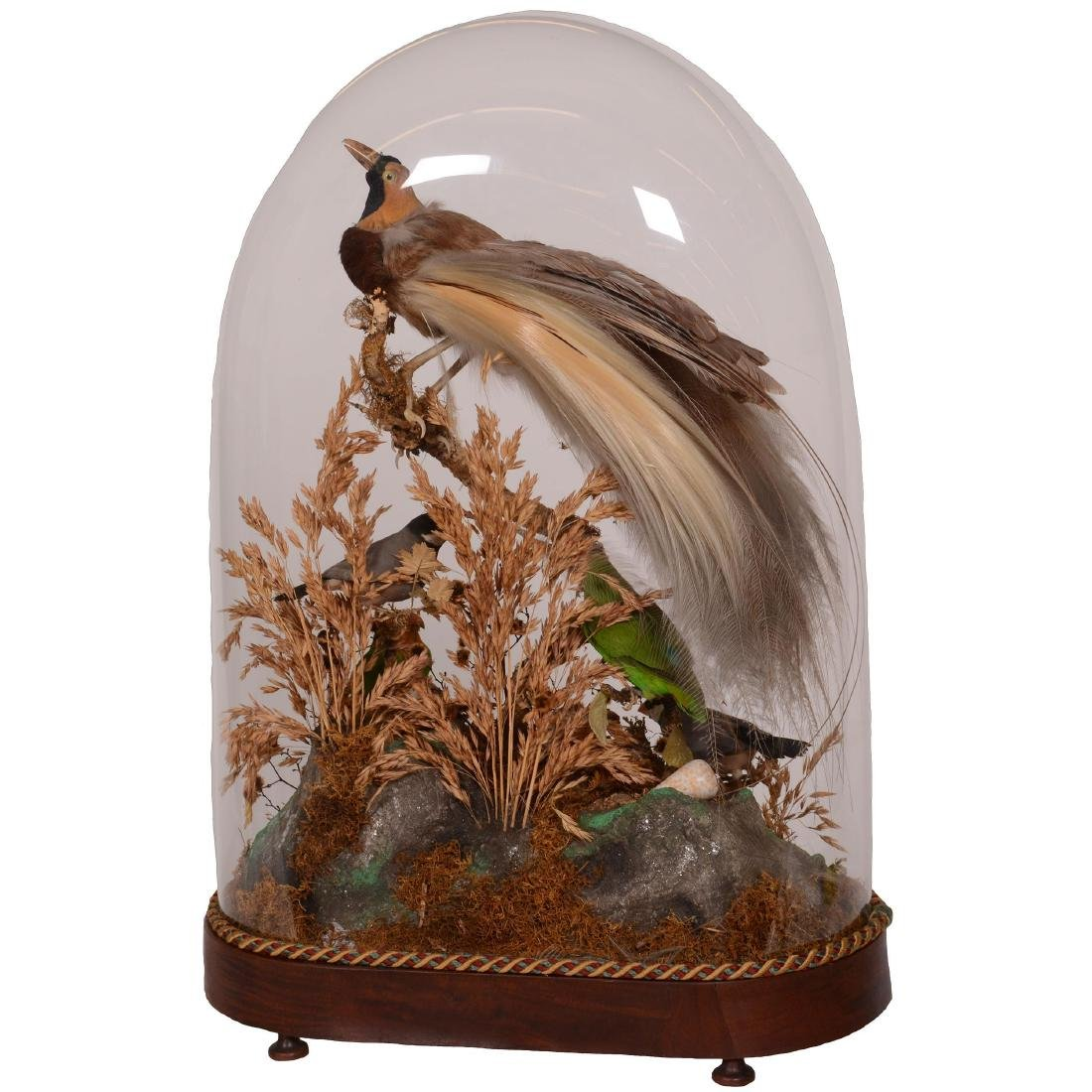 Early Victorian Glass Dome - 4
