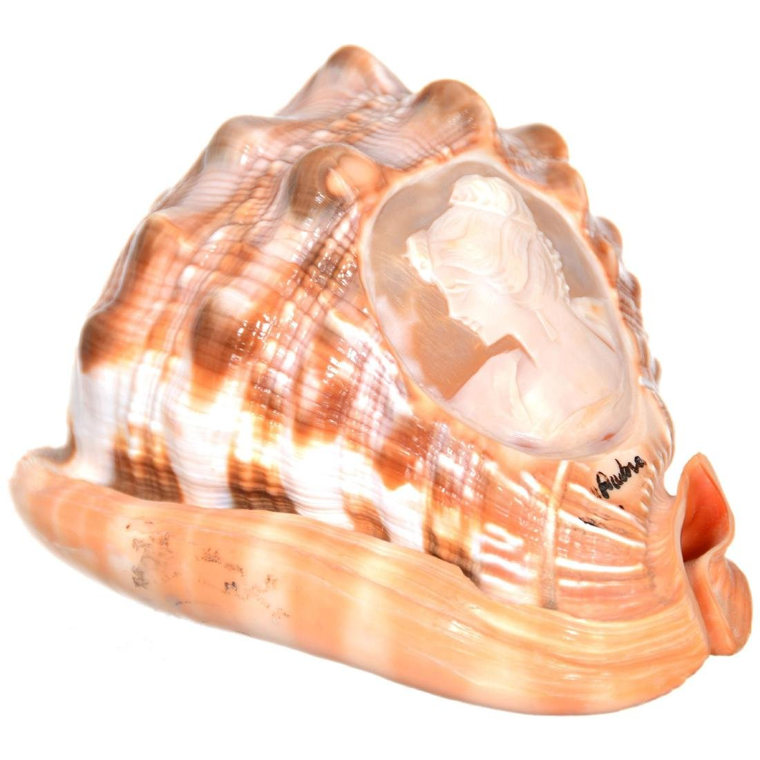 Cameo Carved Sea Shell