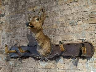 European Red Deer Taxidermy Wall Mount Coat Rack