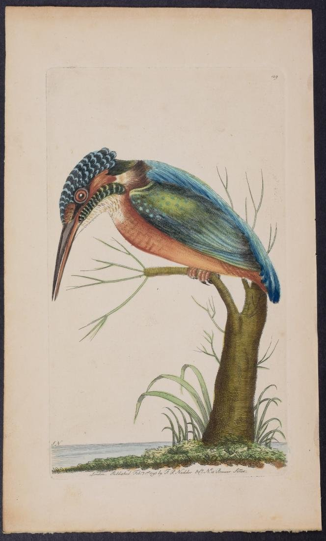 Shaw & Nodder - Common Kingfisher. 129