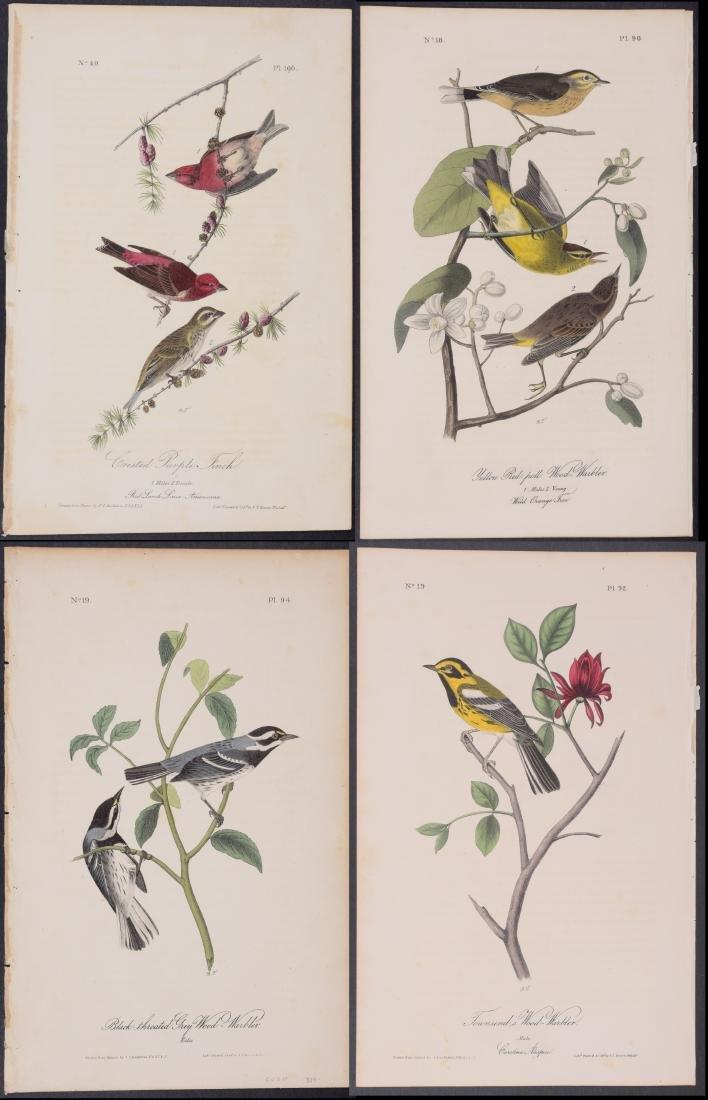 Audubon - 4 Finch & Warbler First Edition Lithographs