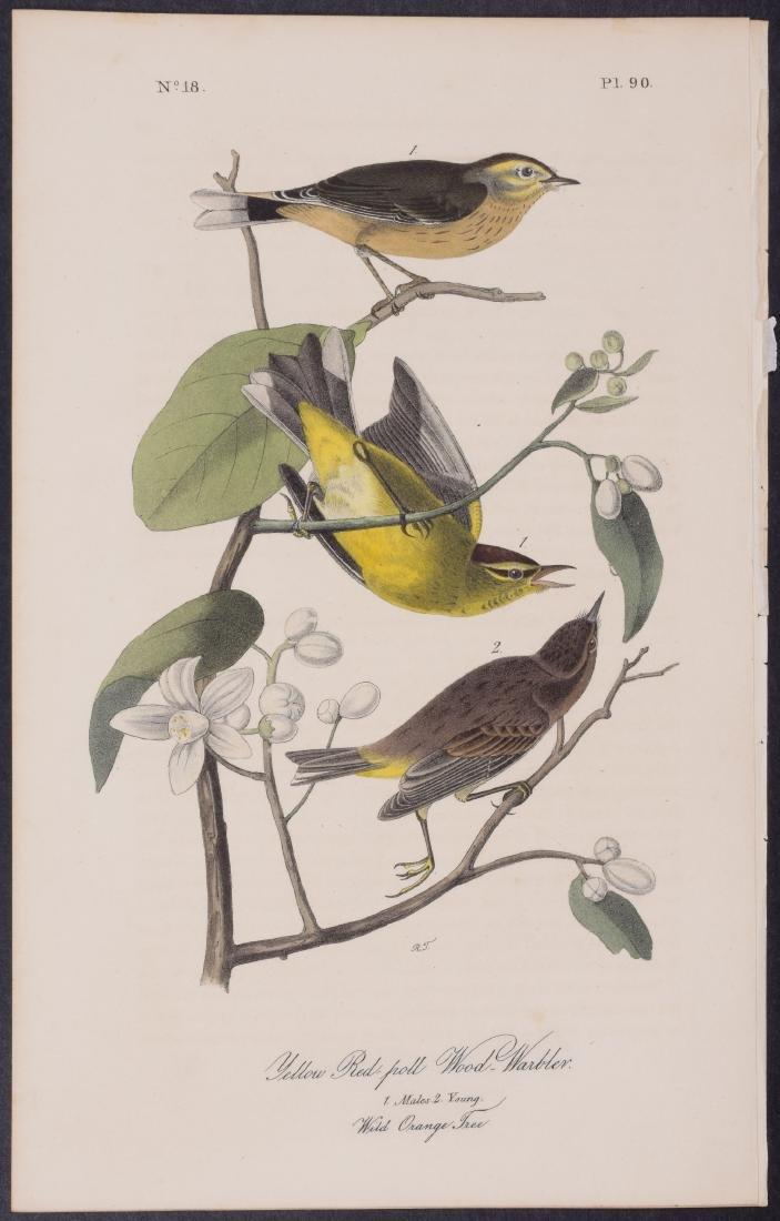 Audubon - 4 Finch & Warbler First Edition Lithographs - 2
