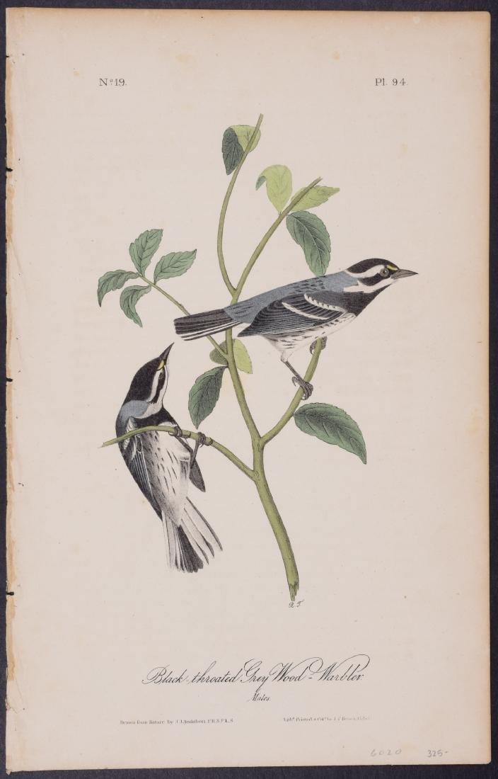 Audubon - 4 Finch & Warbler First Edition Lithographs - 3