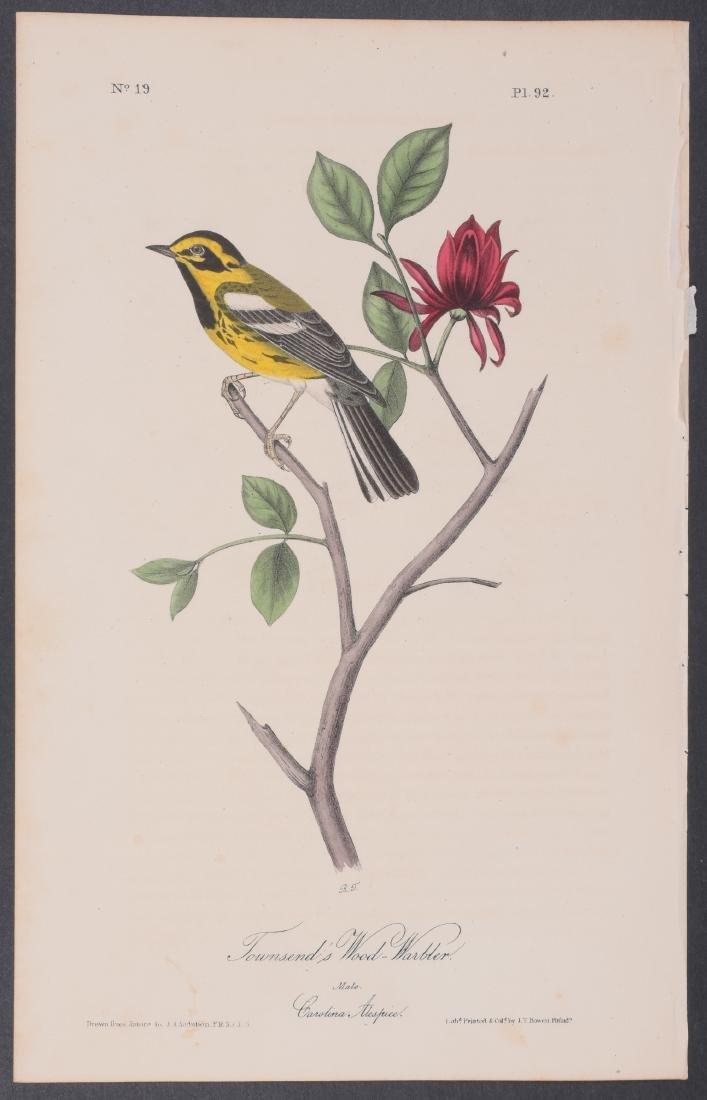 Audubon - 4 Finch & Warbler First Edition Lithographs - 4