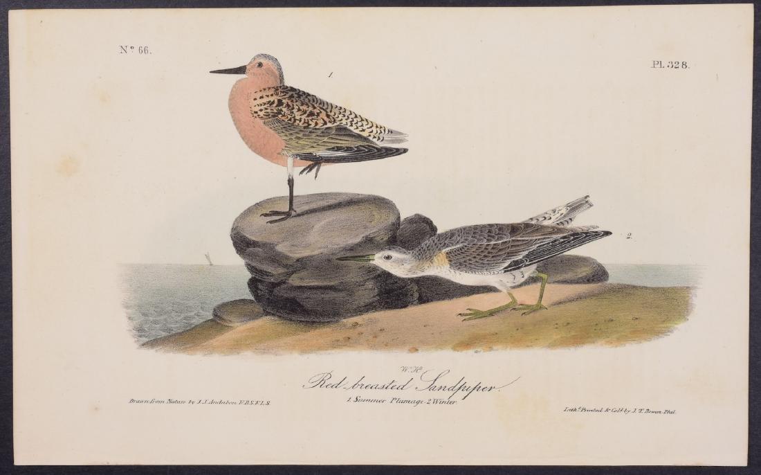 Audubon - 4 Shore Bird First Edition Lithographs