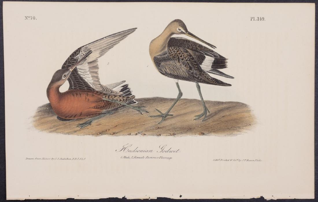 Audubon - 4 Shore Bird First Edition Lithographs - 2