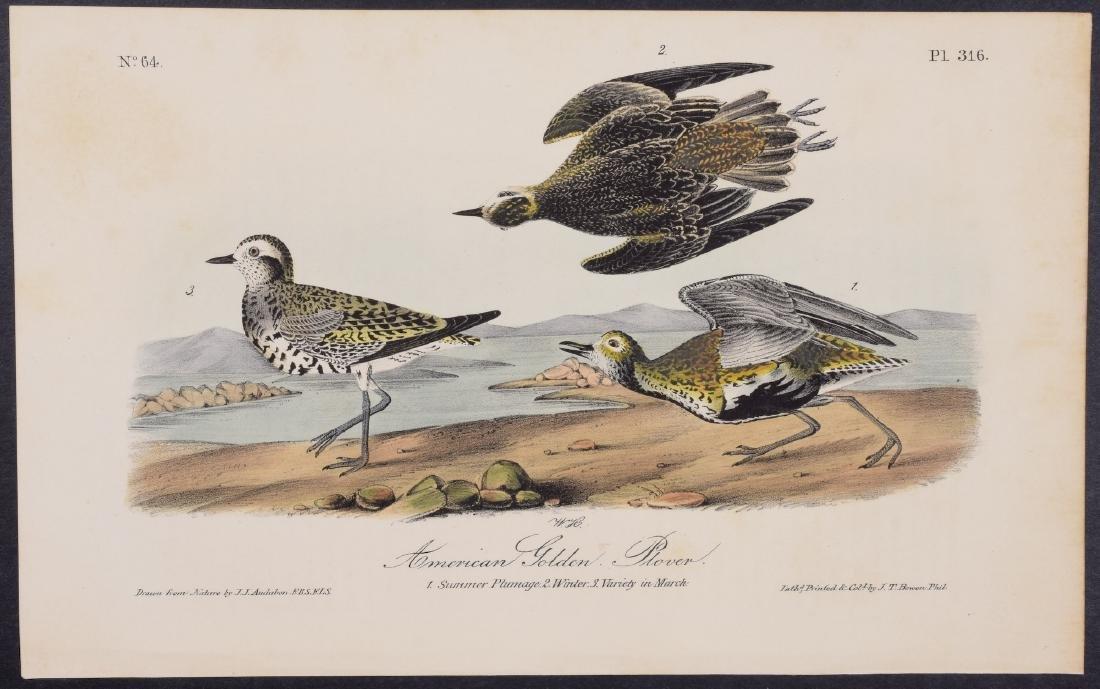 Audubon - 4 Shore Bird First Edition Lithographs - 3