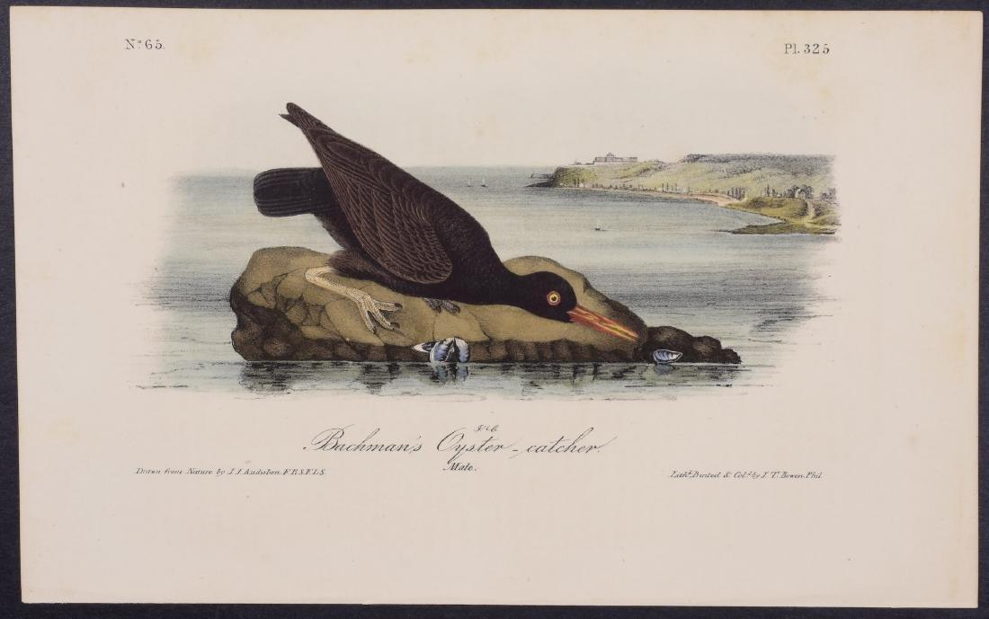 Audubon - 4 Shore Bird First Edition Lithographs - 4