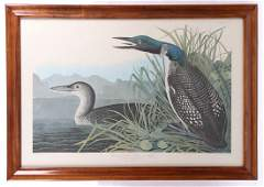 """Lithograph After Audubon, """"Great Northern Diver"""""""