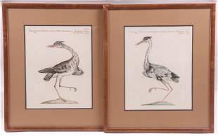 Two 18th Century Bird Engravings