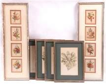 Twelve Botanical Prints Sydenham Edwards etc