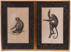 Jean-Baptiste Audebert, Two Zoological Prints