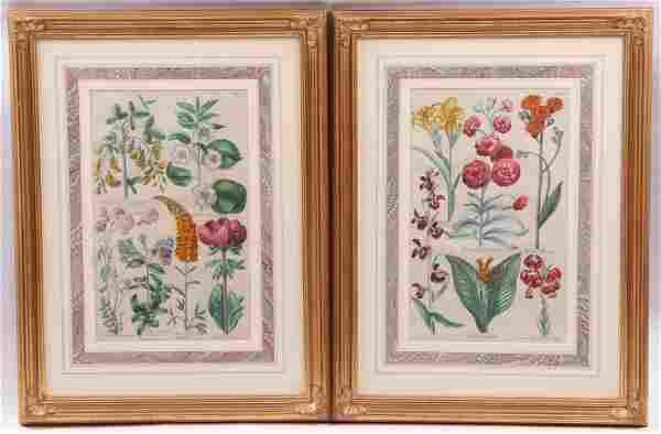John Hill (British c. 1714 - 1775) Two Engravings