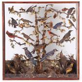 A Victorian Bird Diorama
