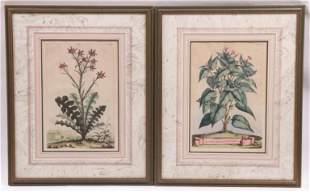 Abraham Munting (1626-1683) Two Botanical Prints