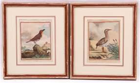 Jacques de Seve (fl. 1742 - 1788) Bird Prints
