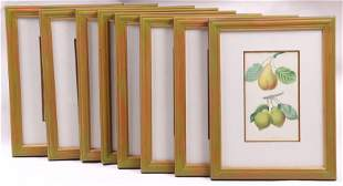 A Set of Botanical Prints, 1822