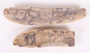 Two Fish Fossils
